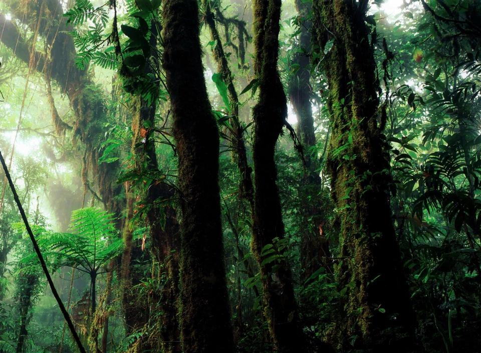 Free Green rain forest