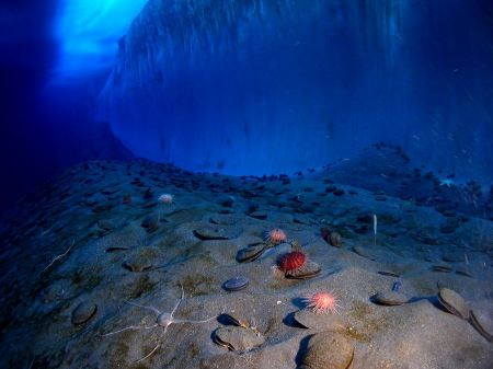 Free underwater New Harbor, McMurdo Sound