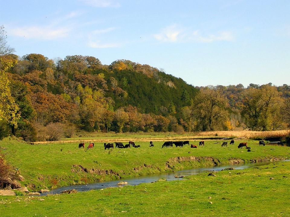 Free Cattle herd grazing in pasture in autumn