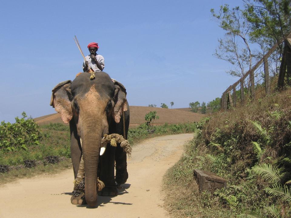Free Elephant and mahaut  driver