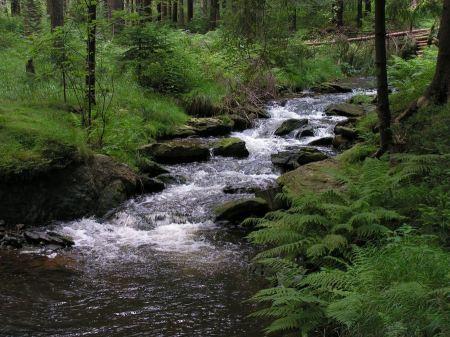 Free Cascade falls over mossy rocks
