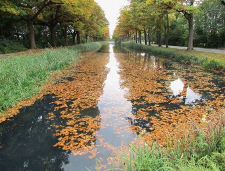Free Poplar trees along the Nederlands canal