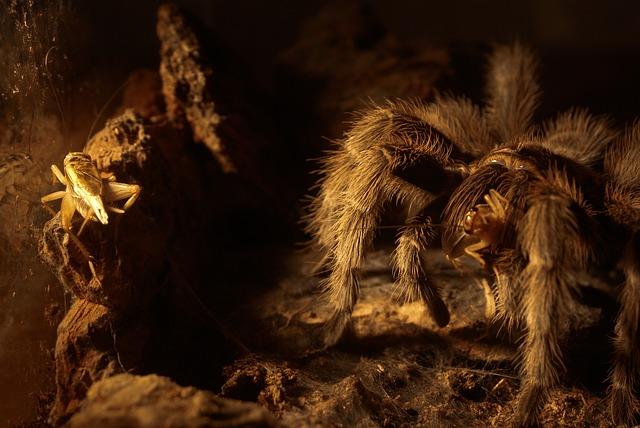 Free spider insect cobweb grasshopper cricket macro