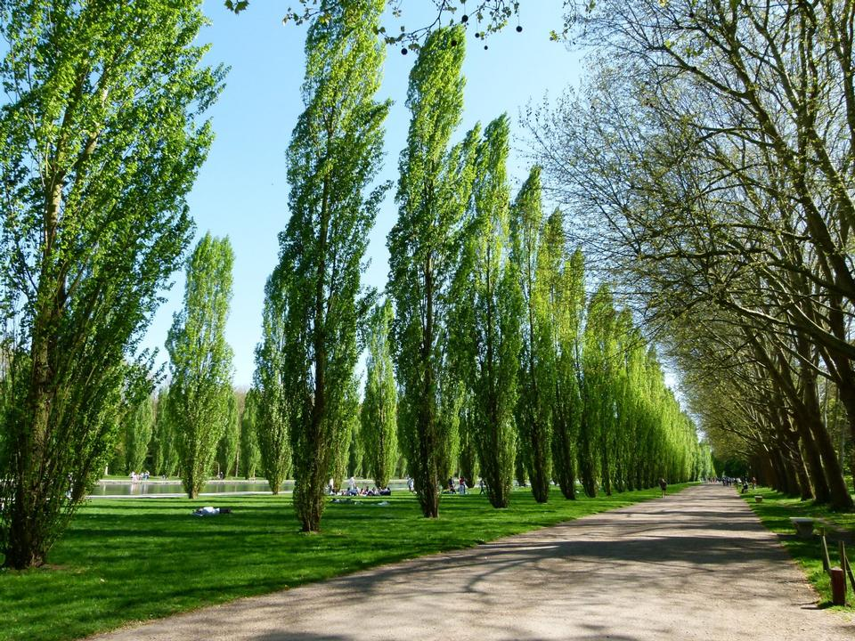 Free Poplars alley in park de Sceaux