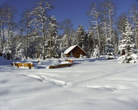 Free wooden house in winter forest