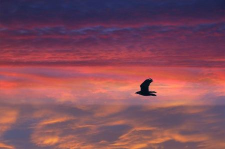 Free Bright sunset panorama with flying birds