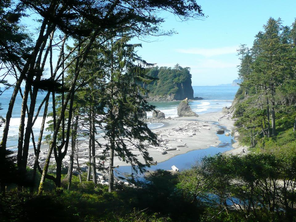 Free Olympic National Park