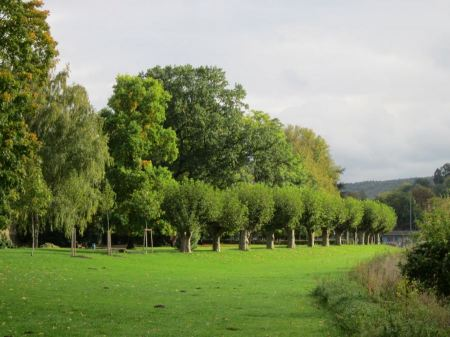 Free Rows of trees and green grass in summer