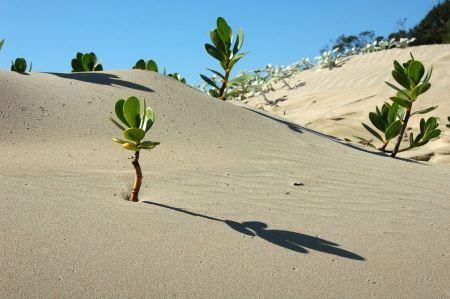 Free tree in desert landscape of africa