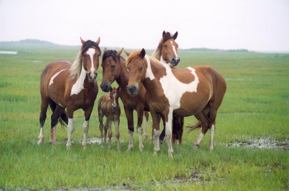 Free Band of horses