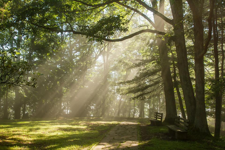 Free Sunlight shines through the trees