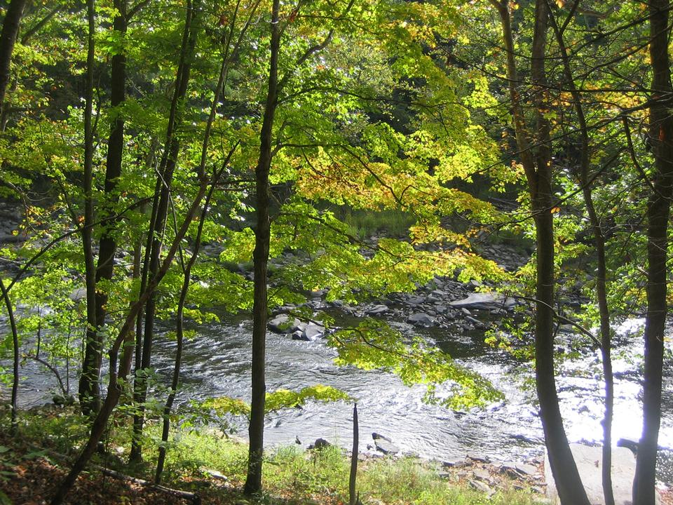 Free Bluestone National Scenic River