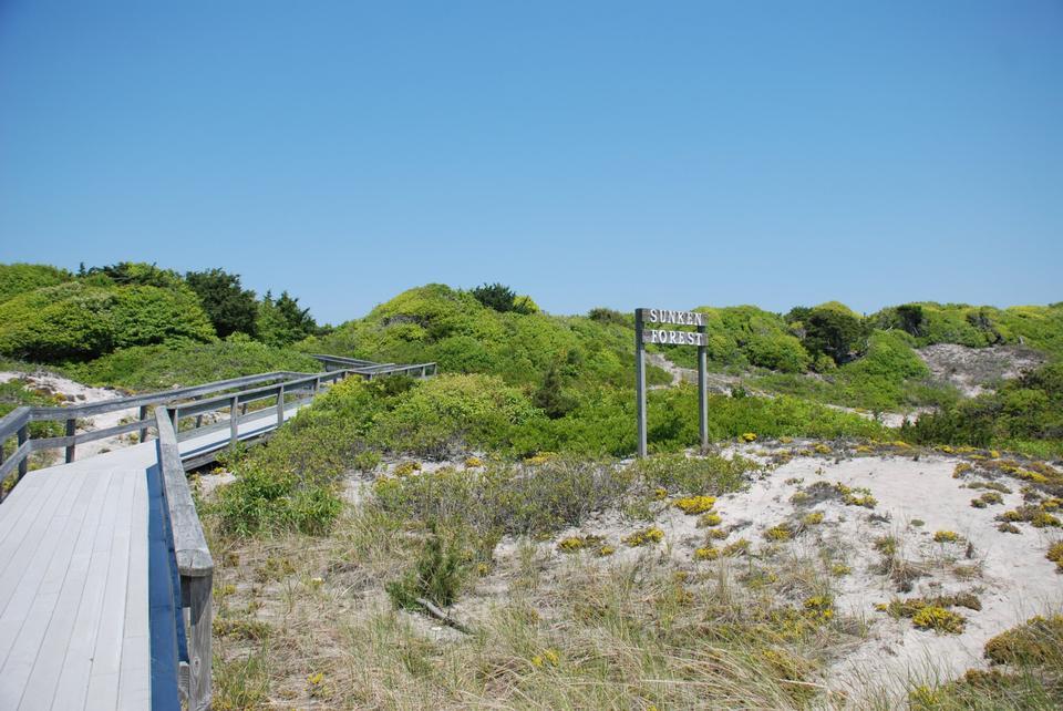 Free Sunken Forest Fire Island National Seashore
