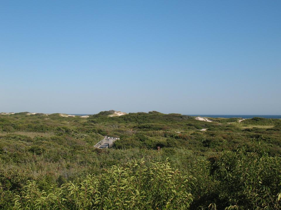Free Fire Island National Seashore