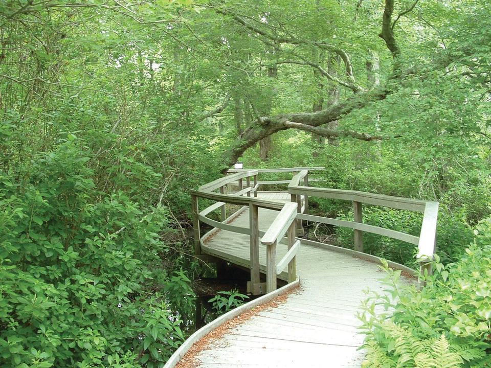 Free Red Maple Swamp Trail Cape Cod National Seashore