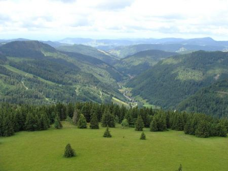Free Upper meadow valley in the Black Forest