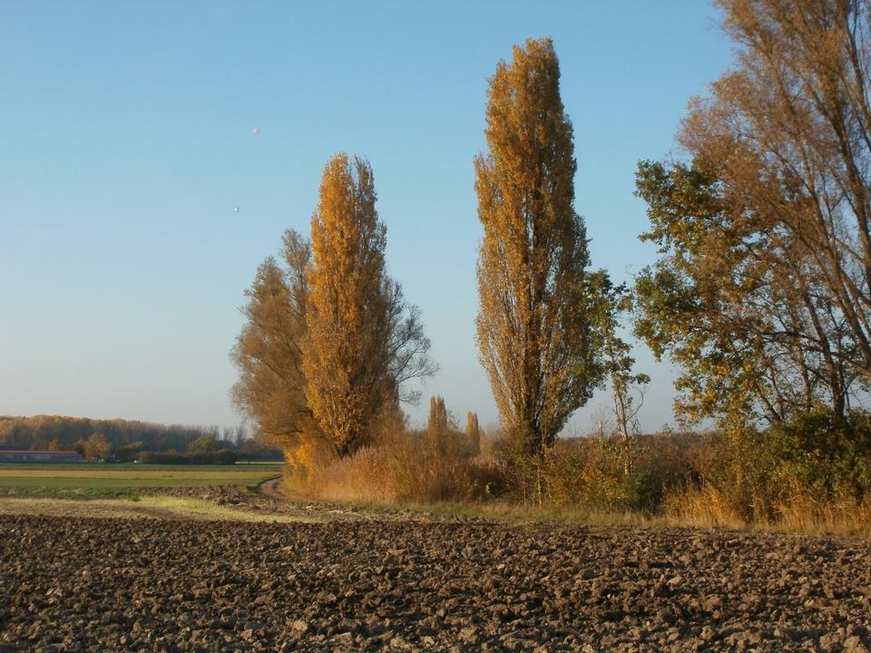 Free Nature reserve Kotlachgraben Germany