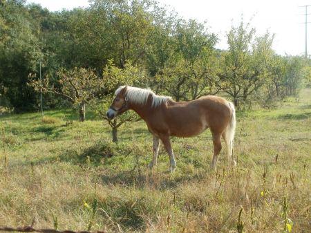 Free cute pony outdoors