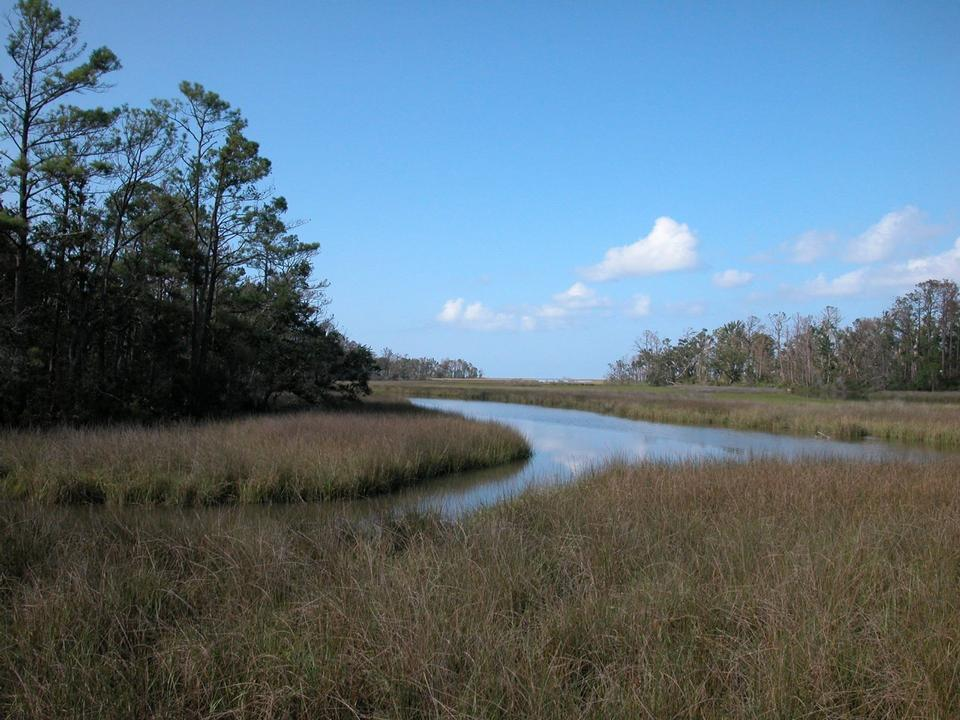 Free Salt Marsh on a Summer Day