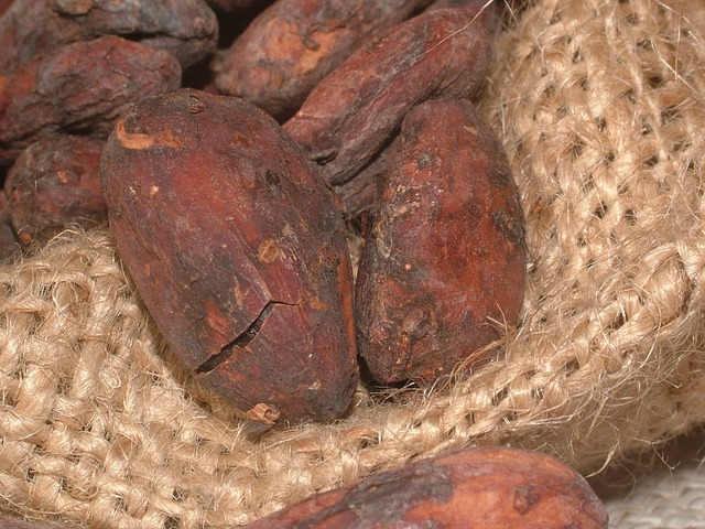 Free cacao beans cocoa cocoa bean seeds plant bean
