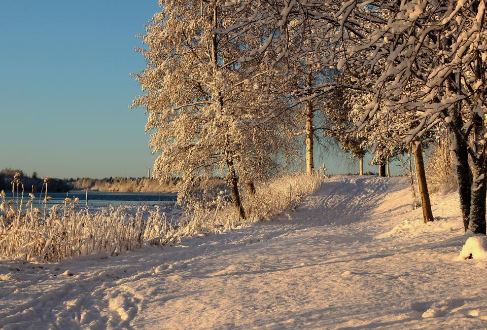 Free Photos: Winter trees on snow | publicdomain