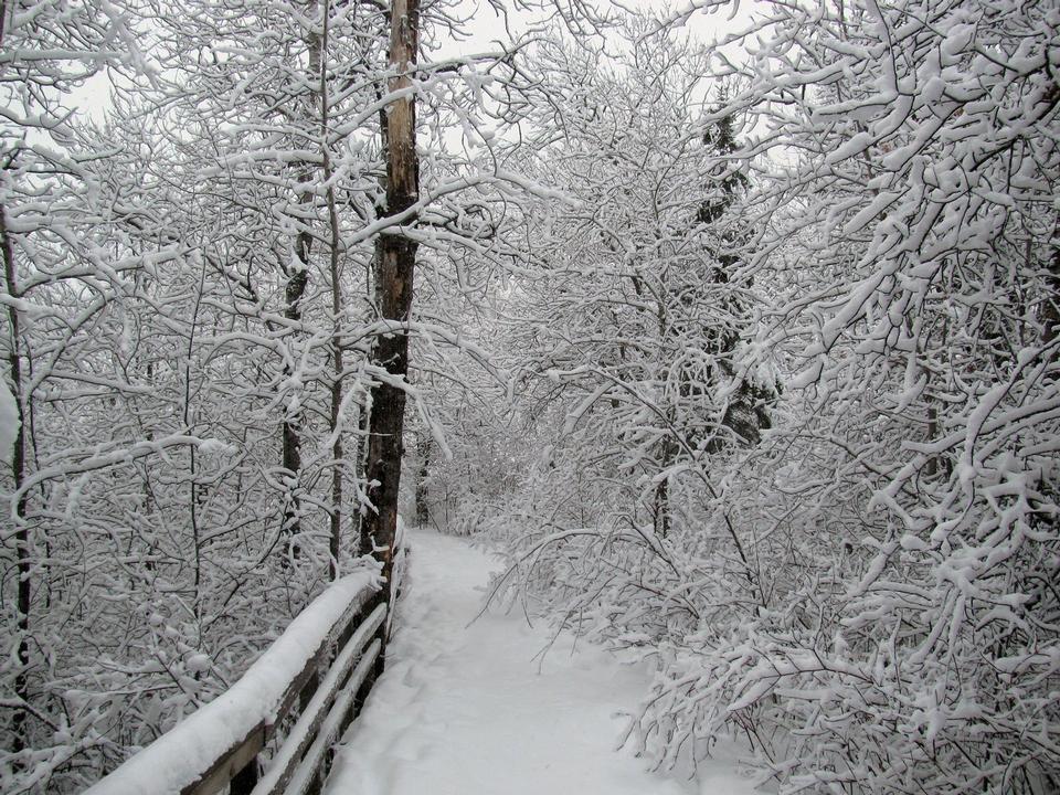 Free Oberholtzer Trail