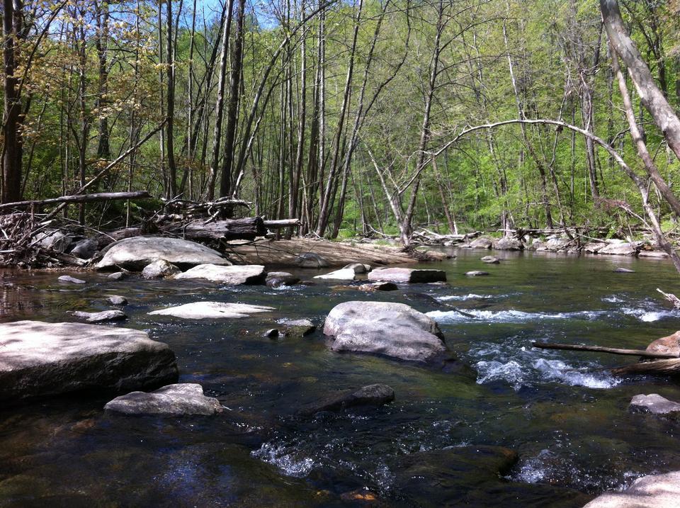 Free Stream in Shenandoah National Park