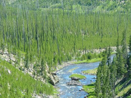 Free Yellowstone National Park Wyoming Forest