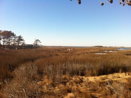 Free Trail heading to the Pacific Ocean City Beach