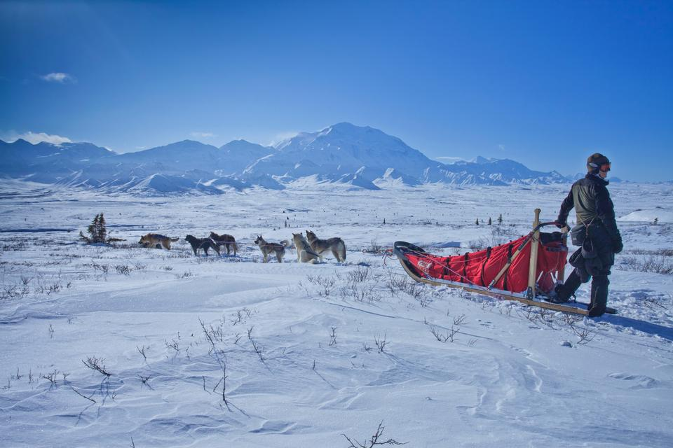 Free Dog sledging trip in cold snowy winter