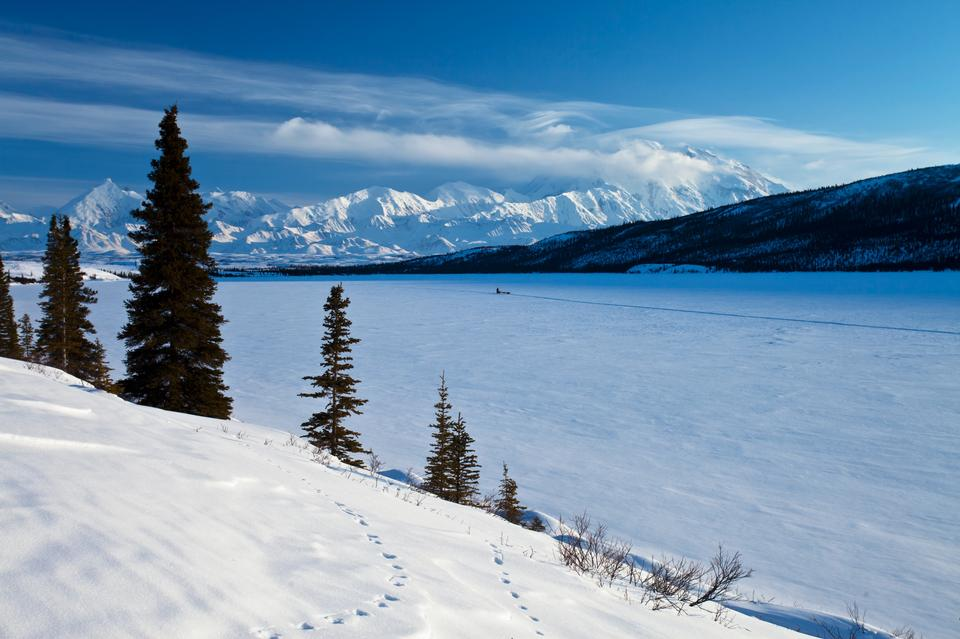 Free Denali and Wonder Lake with Musher Landscape