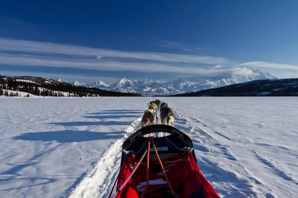 Free sled dog race on snow in winter