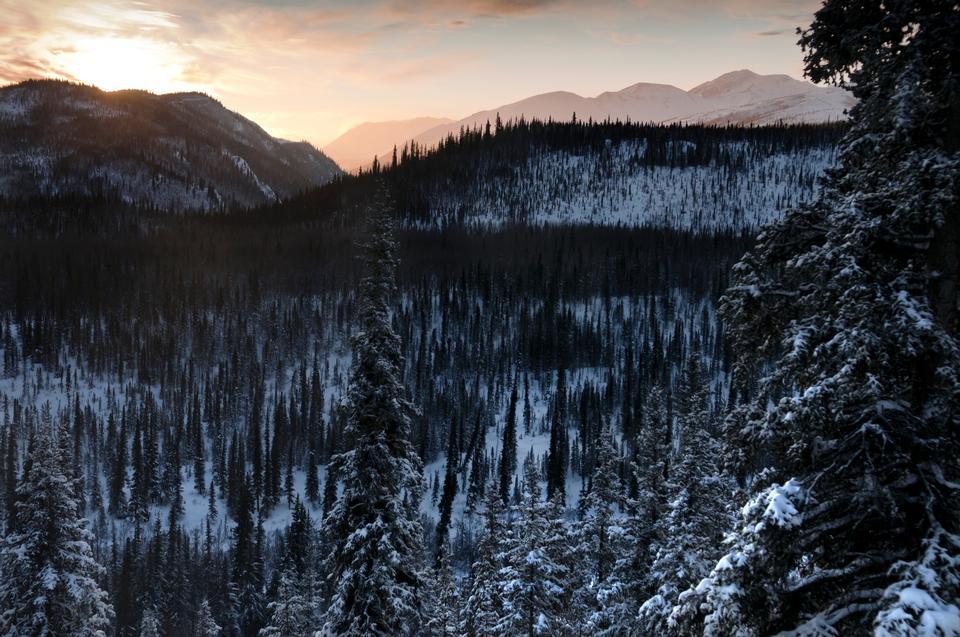 Free Winter Denali National Park and Preserve