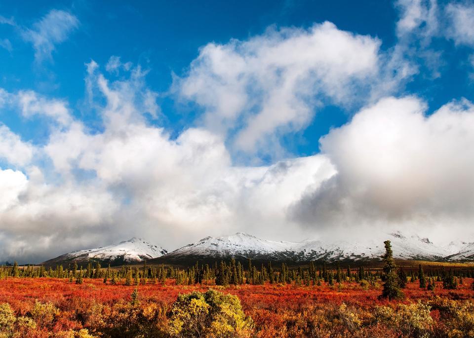 Free Foliage Denali National Park & Preserve