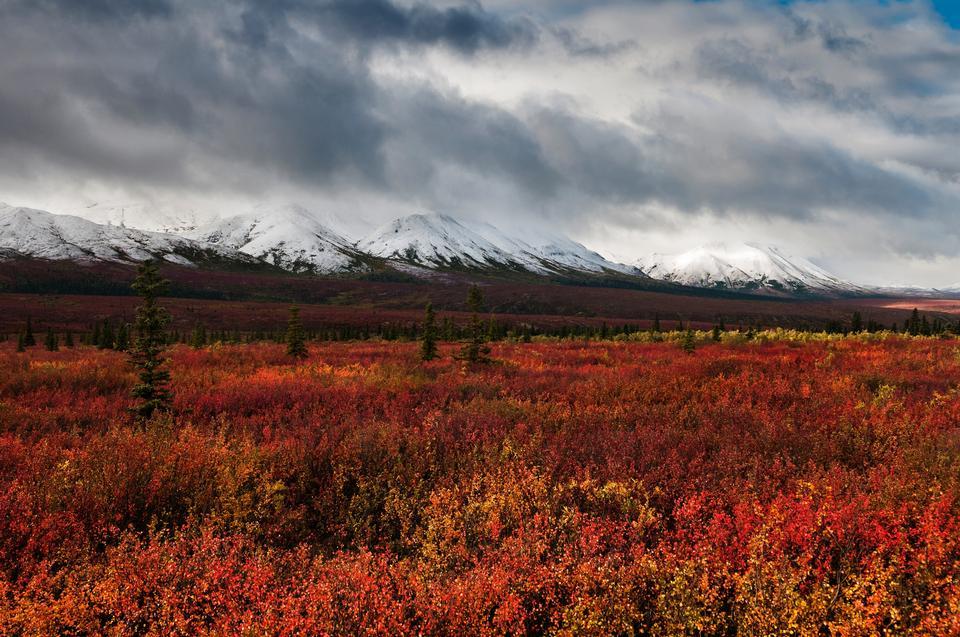 Free Oceans of Color  Denali National Park Alaska