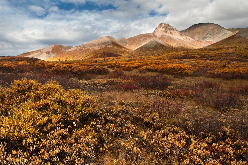 Free Toklat Denali National Park Alaska