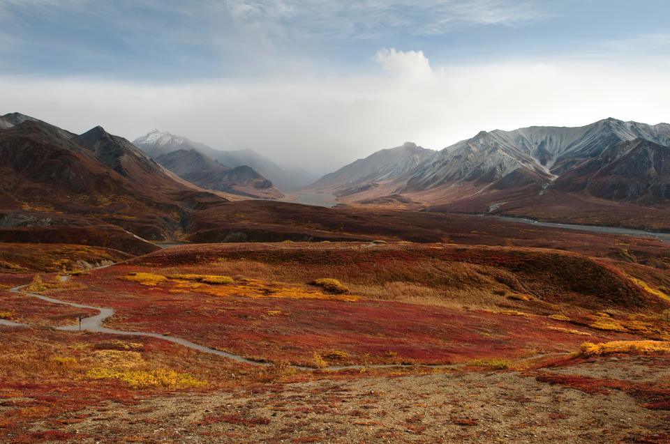Free Thorofare, Fall  - Denali National Park