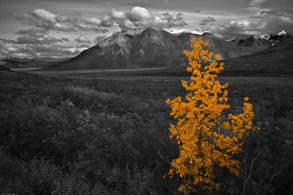 Free Denali National Park