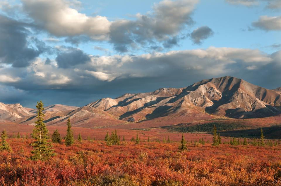 Free Front Country- Alaska Range in red Denali National Park