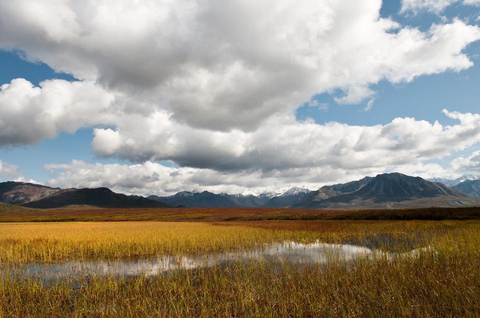 Free Ephemeral pond Denali National Park & Preserve