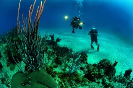 Free Two Scuba Divers swim through tropical fish on an ocean reef