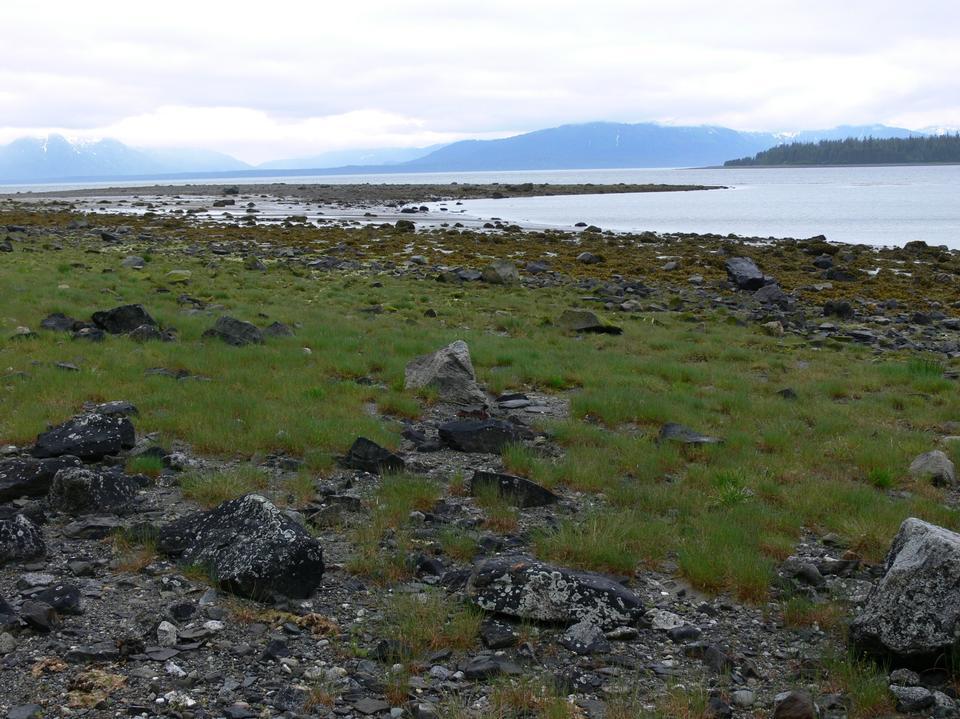 Free Photos: Shoreline in Glacier Bay Alaska | ustrekking