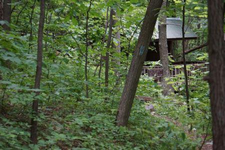 Free Shelter in Harmony Trail Shenandoah