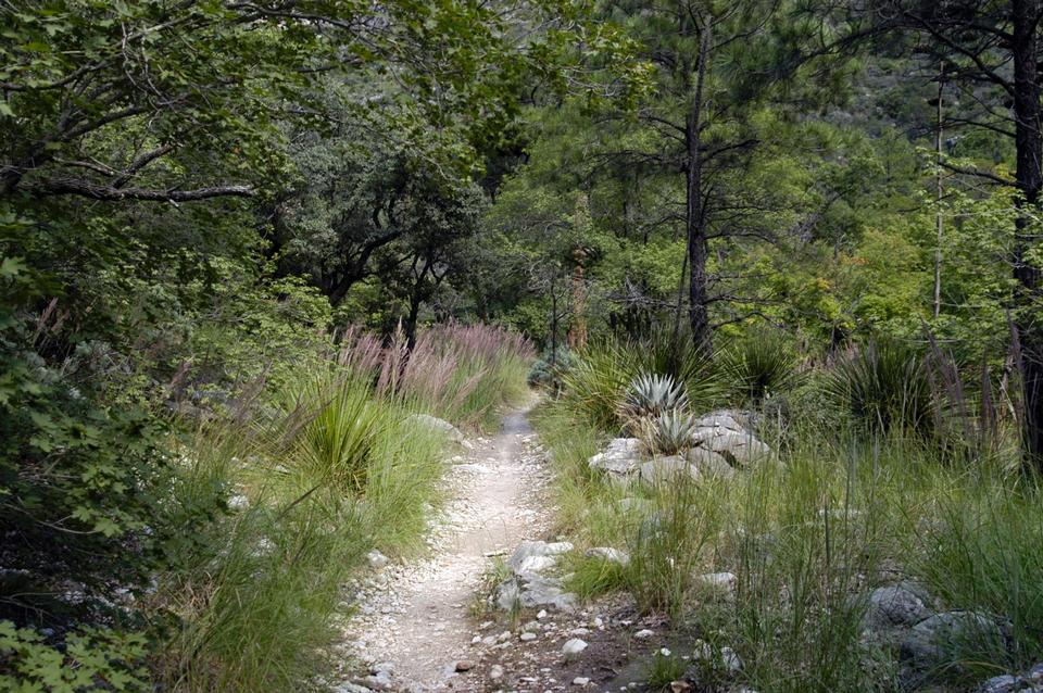 Free The McKittrick Canyon Trail