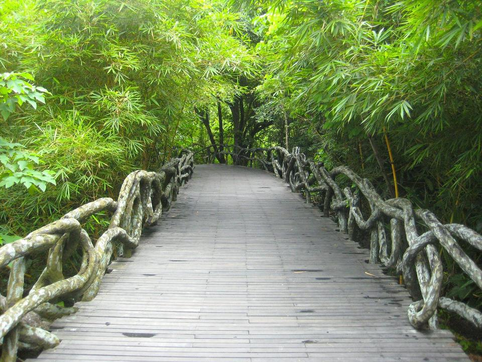Free Wooden path and forest in Yanoda China