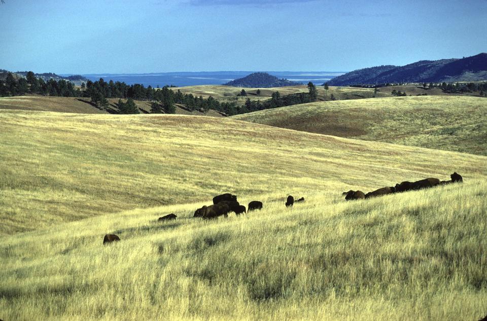 Free Wind Cave National Park Landscape
