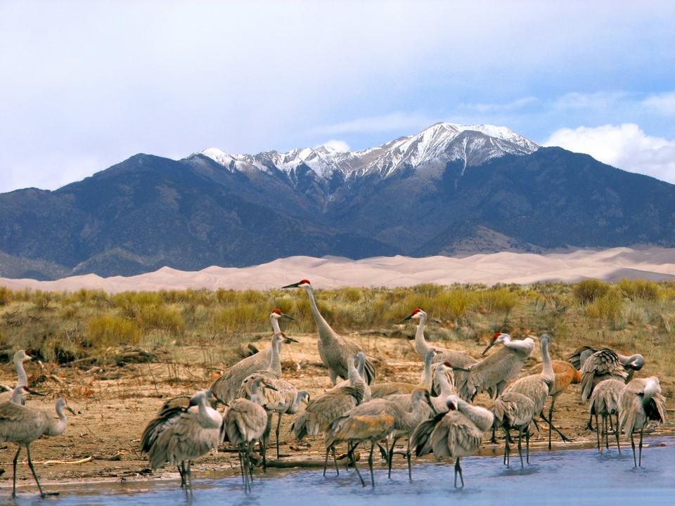 Free Sandhill Cranes, Dunes, and Mt. Herard