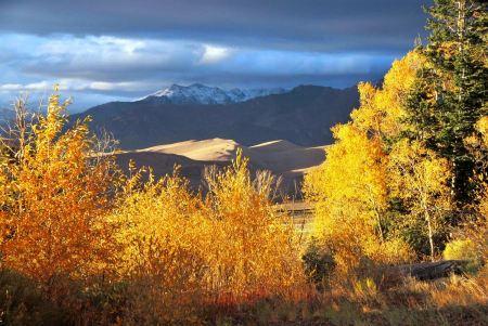 Free Cottonwoods, Autumn Great Sand Dunes National Park & Preserve
