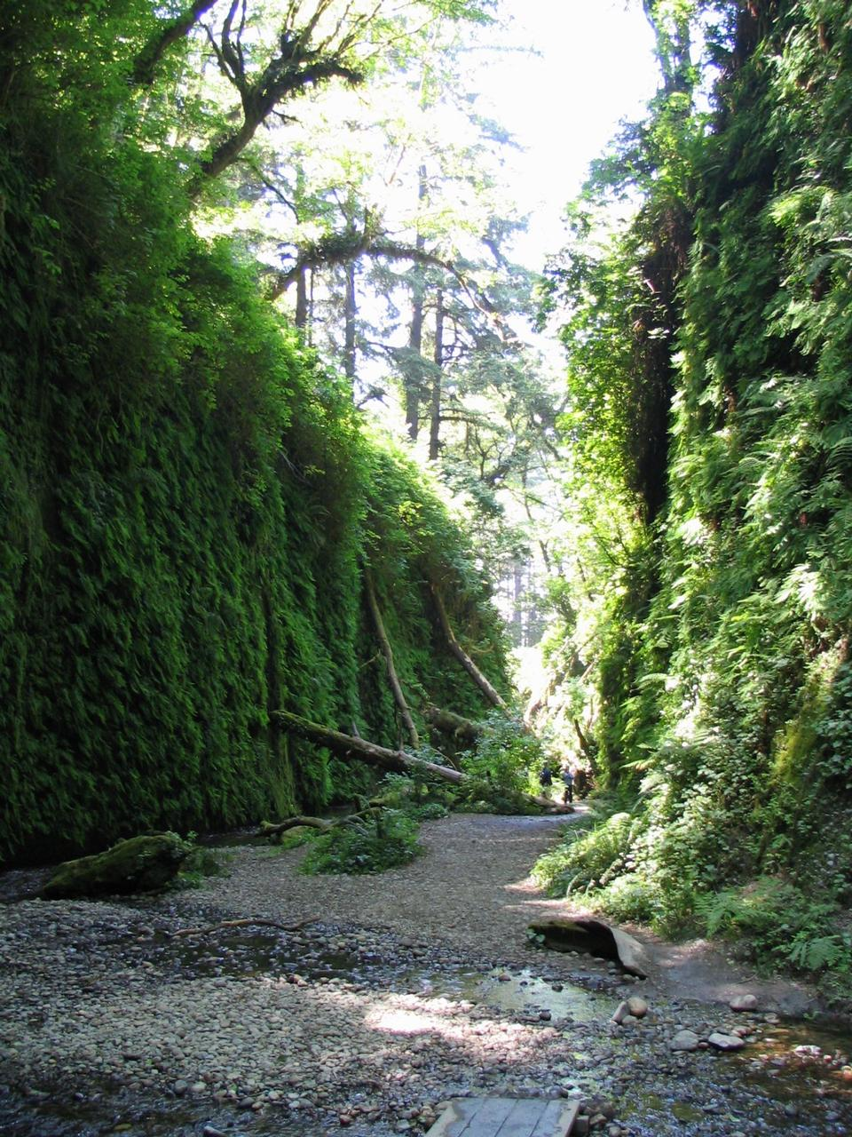 Free Hiking in Fern Canyon