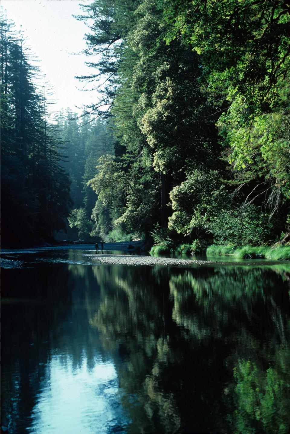 Free Redwood Creek Hiking